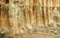 Nghiên cứu khoa học về ảnh hưởng của sợi amiăng trắng - David M. Bernstein & John A. Hoskins